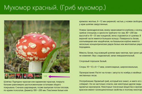 Съедобные и несъедобные грибы приложение Windows 10 !