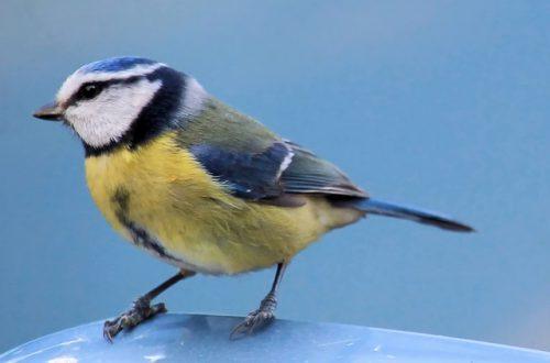 Приметы, что значит птица, ударившаяся в окно