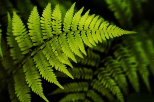 Самые сильные магические травы (лечебные)