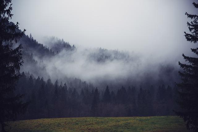 trees-691048_640