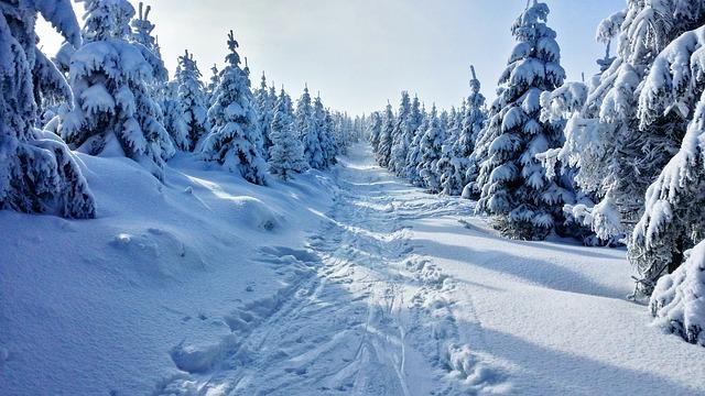 ёлки зима лес ель
