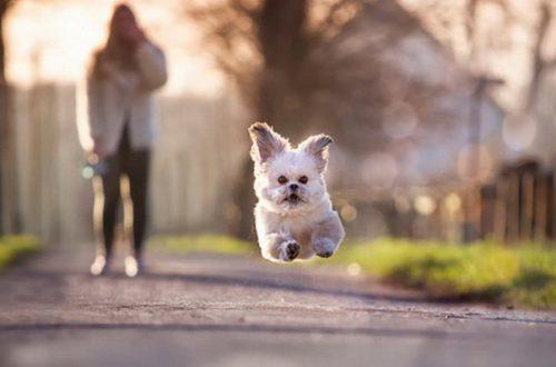 10 лайфхаков для владельцев собак: должен знать каждый