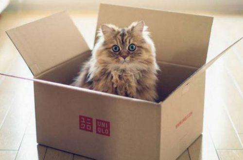 ТОП 10 лайфхаков, как найти общий язык с кошкой: особенности натуры