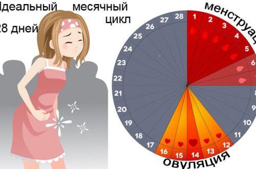 Какие месячные при беременности на ранних сроках
