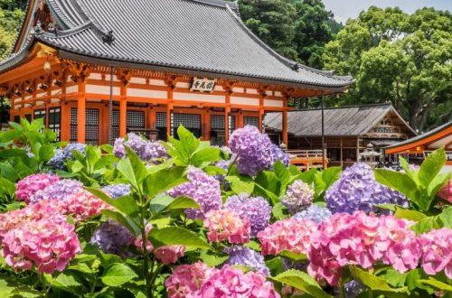В какое время года лучше всего путешествовать по Японии