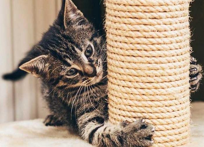 ТОП 10 лайфхаков, как сделать кота счастливым: это просто